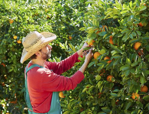 South Africa gives back green light to Spanish ports for their citrus exports